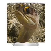 Gold-speck Jawfish Pouting, North Shower Curtain
