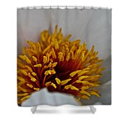 Gold Stamen Shower Curtain