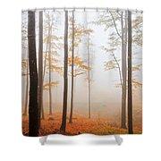 Golden Autumn Forest Shower Curtain