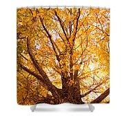 Golden Autumn View Shower Curtain