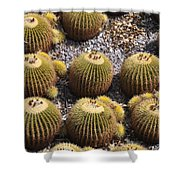 Golden Barrel Cactus 2 Shower Curtain