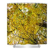 Golden Canopy Shower Curtain by Rick Berk