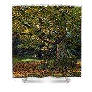 Golden Cappadocian Maple. Shower Curtain