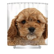 Golden Cockerpoo Puppy Shower Curtain
