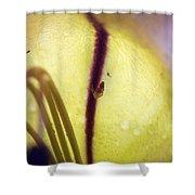 Golden Cup Flowe Study 2 Shower Curtain