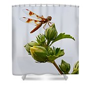 Golden Dragon Shower Curtain