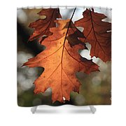 Golden Fall Leave's Close Up Shower Curtain