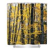 Golden Forest Shower Curtain