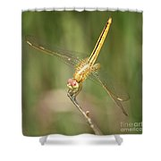 Golden Glow In The Marsh Shower Curtain