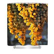 Golden Grapes Shower Curtain by Elaine Plesser