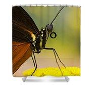 Golden Helicon On Flower Shower Curtain
