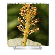 Golden Hibiscus Stamen Shower Curtain