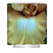 Golden Iris Shower Curtain