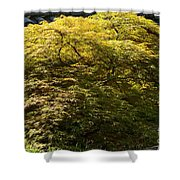 Golden Japanese Maple Shower Curtain