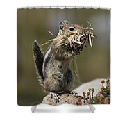 Golden-mantled Ground Squirrel Shower Curtain