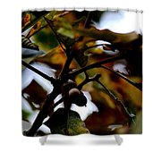 Golden Oak At Nightfall Shower Curtain