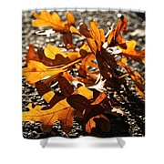 Golden Oak Shadows Shower Curtain