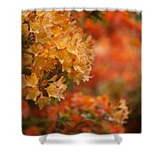Golden Orange Radiance Shower Curtain