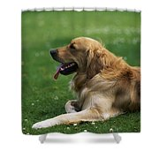 Golden Retriever Dog Laying In The Grass Shower Curtain