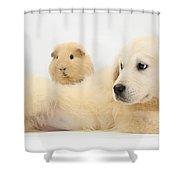 Golden Retriever Pup And Guinea Pig Shower Curtain