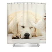 Golden Retriever With Two Kittens Shower Curtain by Mark Taylor