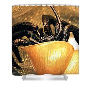 Golden Seashell Crab Still Life Shower Curtain