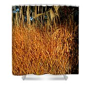 Golden Silver Grass Shower Curtain