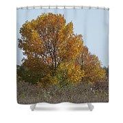 Golden Tree II Shower Curtain