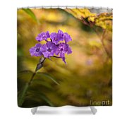 Golden Violets Shower Curtain