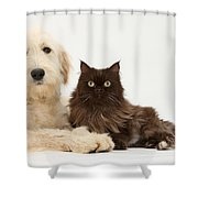 Goldendoodle And Chocolate Cat Shower Curtain