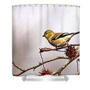 Goldfinch In Sweetgum Shower Curtain