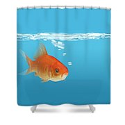Goldfish Carassius Auratus Shower Curtain