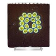 Gonium Pectorale, Lm Shower Curtain