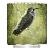 Good Things Come In Small Packages  Shower Curtain