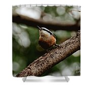 Good View Shower Curtain