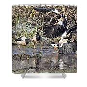 Goose Fight Shower Curtain