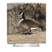 Goose Profile Shower Curtain