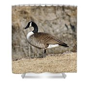 Goose Standing Still Shower Curtain