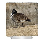 Goose With Head Cocked  Shower Curtain