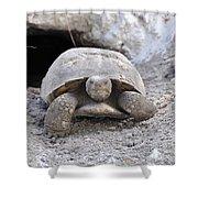 Gopher Tortoise Shower Curtain
