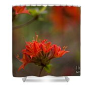 Gorgeous Cluster Shower Curtain