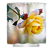 Gorgeous Roses Shower Curtain