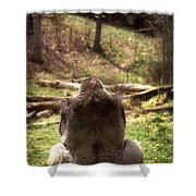 Gorilla At Peace Shower Curtain