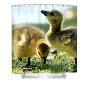Goslings 6 Shower Curtain