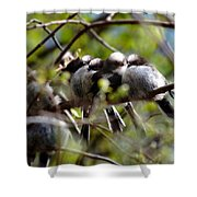 Gossip Birds Shower Curtain
