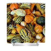 Gourdgeous Shower Curtain by Kevin Fortier