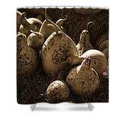 Gourds In Sepia Shower Curtain