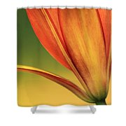 Graceful Shower Curtain