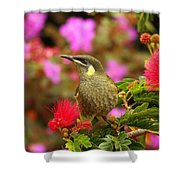 Graceful Honeyeater Shower Curtain