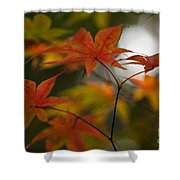 Graceful Layers Shower Curtain